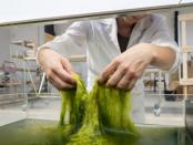 Bioplastik: 3D-Drucke auf Basis von Algen