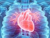 Tarnkappengewebe für den Herzmuskel