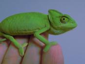 """""""openSUSE-Distribution ist eine stabile einfach zu bedienende vollständige Mehrzweck-Distribution"""""""
