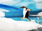 """""""Manjaro ist eine bedienerfreundliche Linux-Distribution"""""""