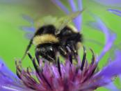"""Diebstahl bei Imkern: """"Das liegt auch daran dass Bienen immer wertvoller werden"""""""