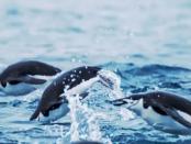 Xubuntu: Das ressourcensparende Betriebssystem
