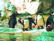 Linux Mint versus Ubuntu: "Funktionieren beide sehr gut"