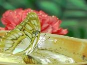 Das Schmetterlingshaus Jonsdorf in der Lausitz