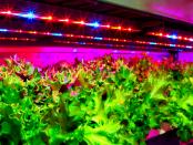 """Kunstlicht bei Pflanzenaufzucht: """"Photosynthese von essenzieller Bedeutung"""""""