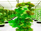 Aeroponik: Pflanzen wachsen in einer Nährlösung