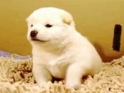 """Hunderucksack: Wie PoochPak aus jeden gewöhnlichen Hund einen """"Robohund"""" macht"""