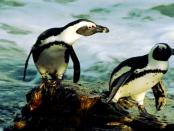 Betriebssystem Chromium OS: Der etwas andere Ansatz