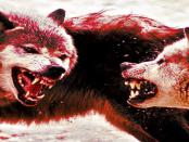 Wolfsromantiker versus Realität der Natur