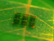 Das transparente und elektrisch leitfähige Holz