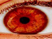 Mojo Vision: Die Augmented-Reality-Kontaktlinse