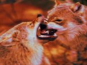 """Falsche Wolfsromantik """"Freilandhaltung von Nutztieren zum agrarischen Masochismus verkommen"""""""