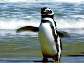 Linux Mint: Das Betriebssystem für Einsteiger