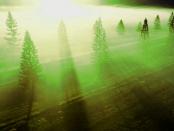 Betreten Verboten: Warum Wälder in Zukunft für alle tabu sind