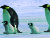 Rettungs-Betriebssystem - Knoppix: Ohne Installation lauffähige Linux-Version