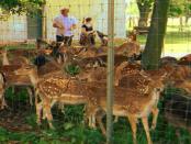 Gut Neu Sacro: Der erlebbare Bauernhof zum Anfassen