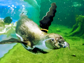 """Spreewelten: """"Schwimmen mit Pinguinen"""""""