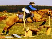 """Reitanlage Tannehof: """"Umgang mit dem Pferd zu erlernen"""""""