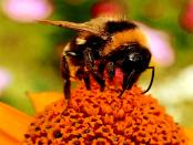 """Imkervein Dittelsdorf und Umgebung: """"Bienen leben in ständiger Wechselwirkung mit der Natur"""""""
