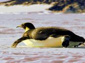 Warum Linux die Welt beherrscht
