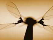 """""""Vom Prinzip des Flügelschlagens"""" - Winzige fliegende Drohne"""