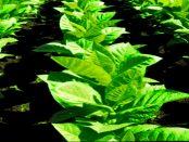 OpenSprinkler: Die Gartenbewässerung mit dem Raspberry Pi