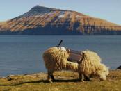 Tourismusförderung mal anders: SheepView auf den Färöer-Inseln