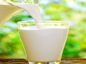 """""""Zusammensetzung der Milch"""" - Ursachen der Laktoseintoleranz"""