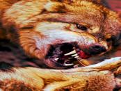 """""""Der Wolf ist ein Problem"""" - Die ungehörten Sorgen der Weidetierhalter"""