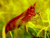 Kirschauer Aquakulturen: Garnlenzucht in der Lausitz