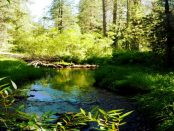 Windenergie und Borkenkäfer: Kahlschlag in Wäldern