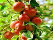 Das Raspberry Pi-Anbausystem für die automatische Pflanzenüberwachung