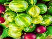 """Gemüsebaubetrieb Kuprat: """"Vielfalt an frischem Gemüse und regionalen Erzeugnissen"""""""
