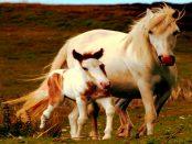 FamilienCampus LAUSITZ - PferdeGut: Therapiepferde zu Heilungszwecke