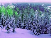 """Winterwandern zwischen Oybin und """"Lausitzer Matterhorn"""""""