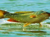 Lausitzer Fischzucht: Zucht von Fischen in Aquakulturen findet auf einer anderen Ebene statt
