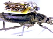 """Eine 250 Milligramm schwere Kamera: """"Fotos und Videoaufnahmen aus Insektenperspektive"""""""