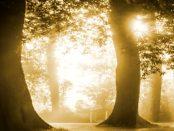 Christliche Spiritualität: Lectio Divina - Die göttliche Lesung