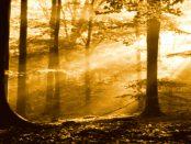 --W E R Β U Ν G-- Onlineshop Regenbogenkreis - Alles was zum natürlichen Leben wichtig
