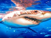Wankende Bonität des Euros - Wenn Finanzhaie das Blut im Wasser riechen