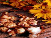 Topinambur aus der Lausitz: Die anspruchslose Pflanze kann ein leckeres Essen liefern