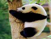 """--W E R Β U Ν G-- bambusliebe: """"Gut für die Umwelt und auf Dauer auch preiswerter als Einwegprodukte"""""""