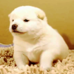 """- W Ε R Β U Ν G - Terra Canis: """"Das erste Hundefutter in 100% Lebensmittelqualität aller Rohstoffe"""""""
