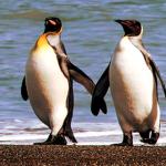 """Linux-Betriebssystem Kubuntu: """"Moderne Oberfläche – Die sich hochgradig individuell gestalten lässt"""""""