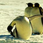 """Live-Distribution: """"Puppy Linux lädt sich komplett in den Arbeitsspeicher"""""""