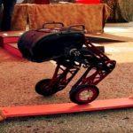 Ascento 2 – Der Roboter mit Beinen und Rädern